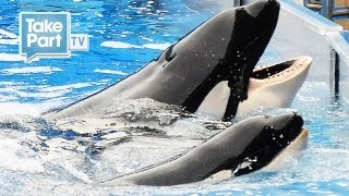 DEATH AT SEAWORLD | EYEWITNESS INTERVIEW with Laura Surovik | The Cove | TakePart