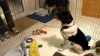 Breeze Learns Table Manners  SAM_1407.AVI