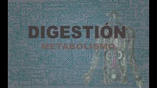 Digestión | Metabolismo
