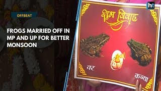 Watch: Frogs married off in MP and UP for better monsoon