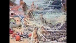 الصيد في السنغال  P1 Fishing in Senegal Peche en Senegal