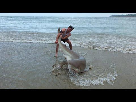 Xxx Mp4 Land Based Shark Fishing NZ 3gp Sex
