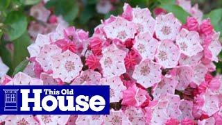 The TOH 10: Deadliest Garden Plants