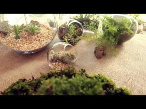 Aprenda a fazer microjardins Learn how to make smalls gardens