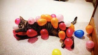 CATS vs BALLOONS 🎈 (HD) [Funny Pets]