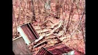 Abelhas do Piauí são transportadas para o Maranhão por causa da seca
