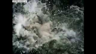 Piranha Attack Compilation''by jony ''bangla