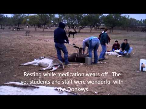 Texas A&M Students and Staff helping PVDR