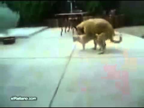 Xxx Mp4 Porno De Gato Y Perro 3gp Sex