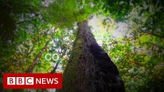 Amazon rainforest: 'Once it's gone, it's gone forever' - BBC News