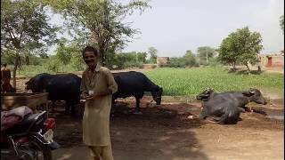 Sohna Pind Gujjran Da- | Pind Da Mama |