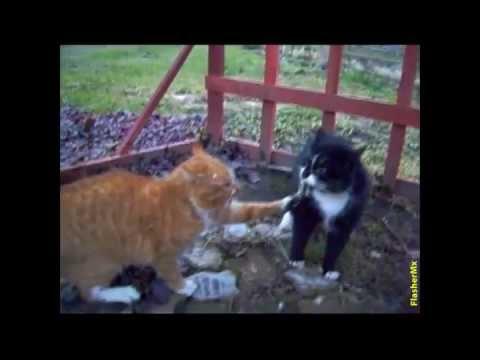 Gatos peleando traduccion Aparece el cuñado
