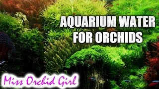 Q&A - Can we use aquarium water with orchids?