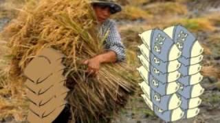 2. Mga Mahahalagang Yugto sa Paglaki ng Palay: Ang mga Kwento ni Ryza - Ang ATM ng Wastong Nutrisyon