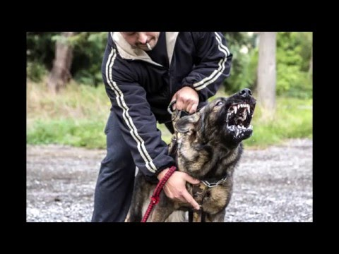 K9 REAL PROTECTION ADRENALINE INJECTION