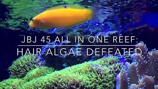 How To Defeat Hair Alage - Reef Tank Update