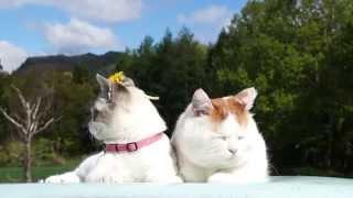 のせ猫 x ↑たんぽぽCat and flower 2014#6