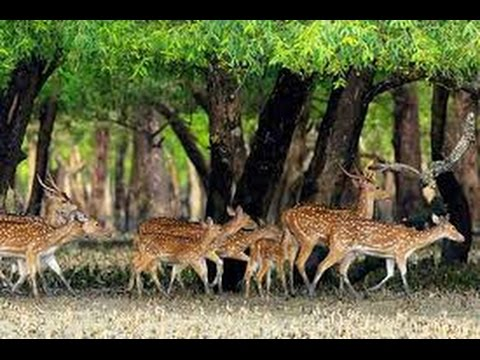 Beautiful Places To See- The Sundarban, Bangladesh (Searching For A Tiger & Deer)