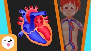 The circulatory system in the human body for kids - Smile and Learn