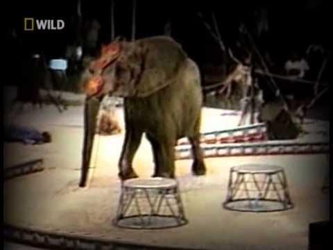 размер, учтите, как слоны нападают на людей интернет-магазине