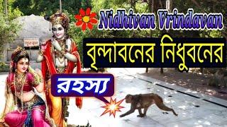 নিধিবন রহস্য মন্দির।nidhivan Vrindavan Night Mystery।nidhivan Mandir Ka Rahasya History (bengali)