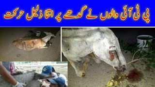 The Pti People Broke the Legs of the Donkey  People of Pti Donkey Hit