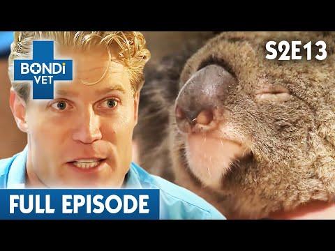 🐨 Depressed Koala Mum S02E13 Bondi Vet