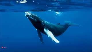 Musique relaxante | Chants Baleines & Dauphins | Ambiace Zen | Détente | Relax''Action
