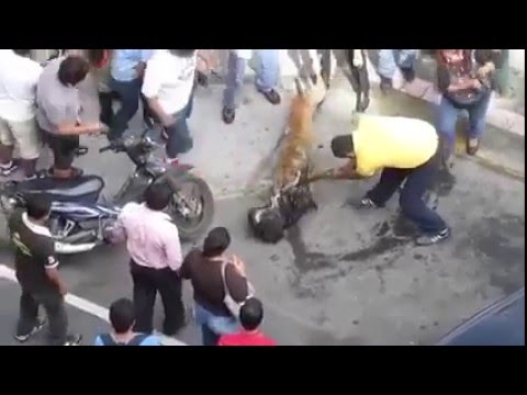 Dog Fight That Shocked Entire World