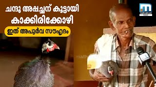Special friendship between a man and a guinea hen
