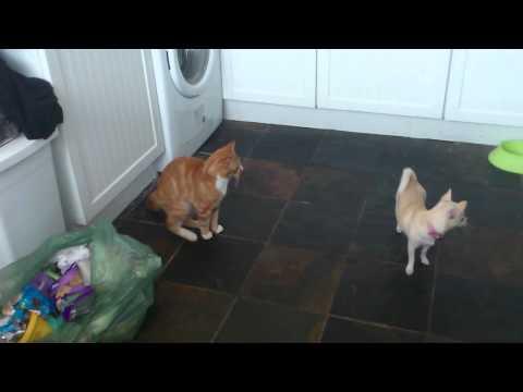 Xxx Mp4 Girl Dog Humps Male Cat 3gp Sex