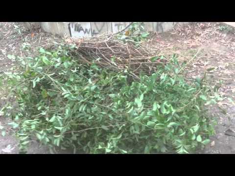 Fucking bush