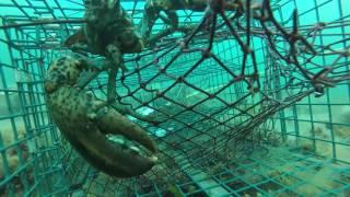 GOPRO Lobster June 28 2016