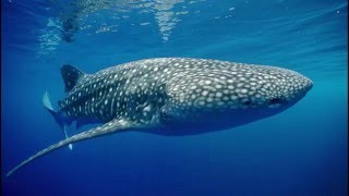 Chant des baleines  Extraordinaire relaxation