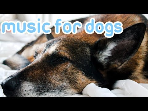 Xxx Mp4 15 HOURS Of Deep Stress Relief Dog Music Music To Help Your Dog Sleep 3gp Sex