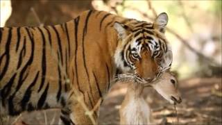 Wild Animals Life  National Geographic channel