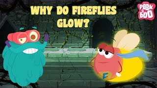 Fireflies | The Dr. Binocs Show | Best Learning Video For kids By Peekaboo kidz | Education Video