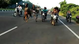 vanyambadi horse race