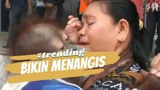 Haru! Ibu ini anggap Orangutan anaknya