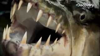 Goliath Tigerfish | River Monsters