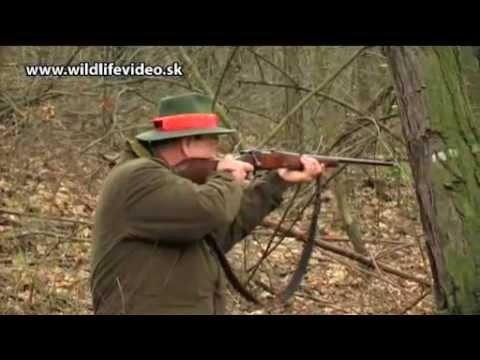 S Kopovmi na diviaky ukážka Wild Boar Hunting in Slovakia trailer