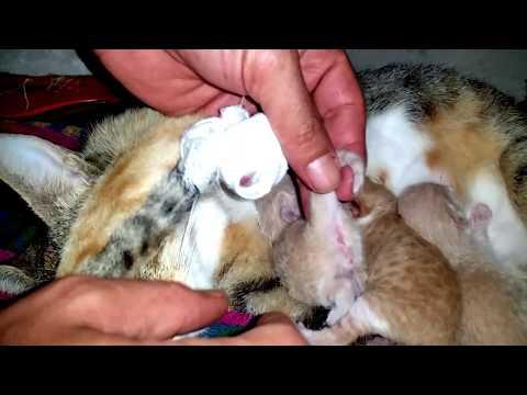 Xxx Mp4 هل تريد ان تعرف كيف تميز بين الذكر والأنثى في صغار القطة بعد ولادتهن بساعات 3gp Sex