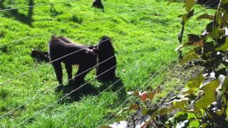 Monkey Sex XXX