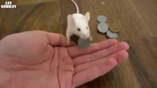 ► Video Animal ◄ Souris Intelligente Paye Pour Sa Friandise