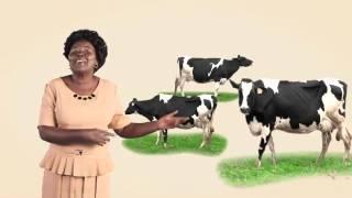 KWFT Dairy Loan TVC