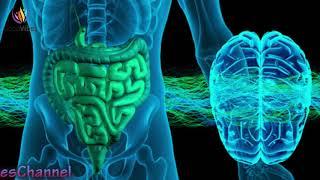 Stomach Colon & Digestion Disorder Treatment ➤ Theta Binaural Beats ➤ Sound Therapy #GV350