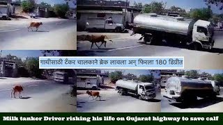 Milk tanker Driver risking his life on Gujarat highway to save calf