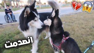 ردة فعل كلبتي لوسي يوم جبت لها ابوها + هجم علينا بسبب !!💔😱