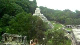 Screaming Monkeys - Scimmie Urlatrici a Palenque (Mexico)