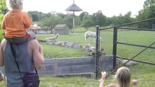 Zombies Attack Hyenas at the Toronto Zoo!